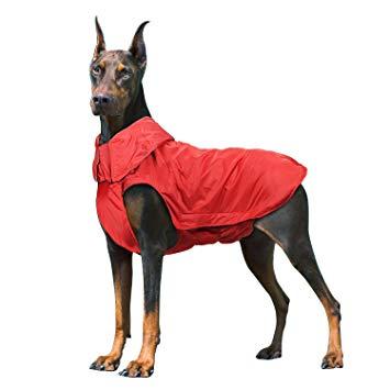 regalos para perros caseros