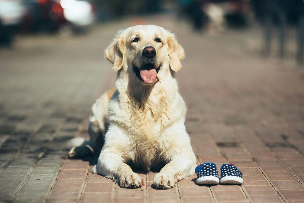 accesorios para perros argentina
