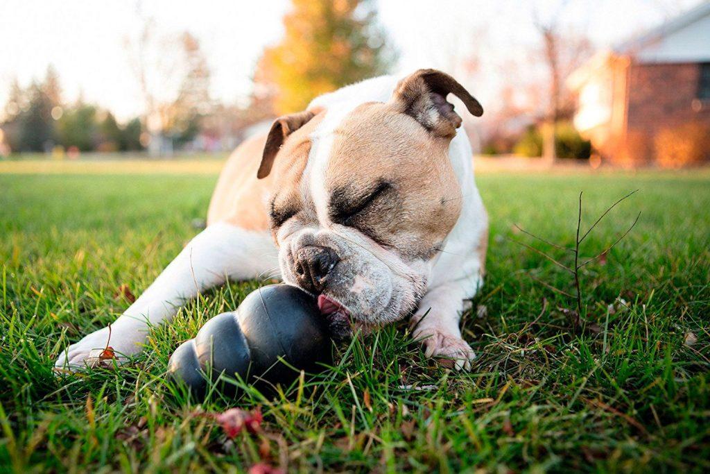 accesorios para perros al por mayor