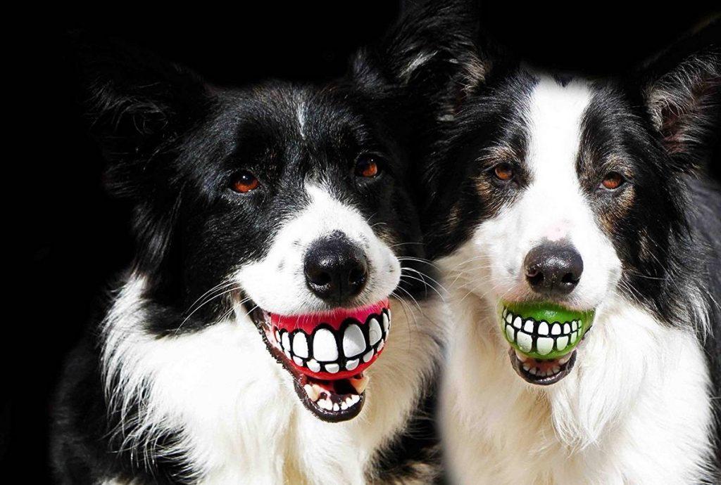 regalos de perros a sus dueños