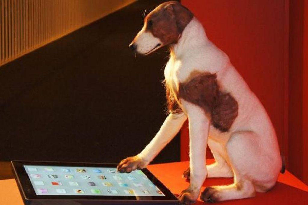 accesorios para perros arequipa