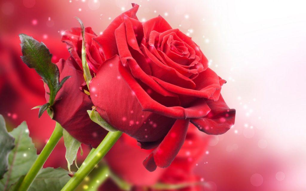 regalos románticos bogota